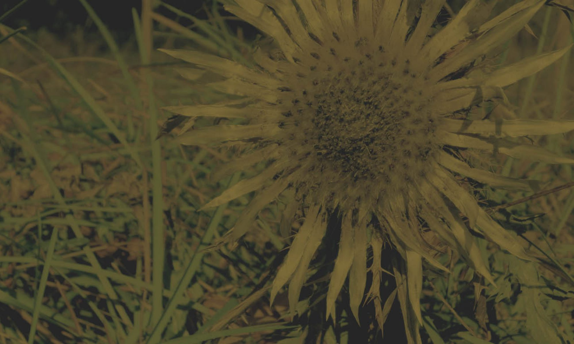 Carline SÀRL - Nature et biodiversité